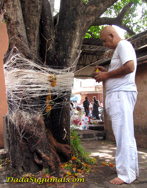 Jal offering to Pipal Tree